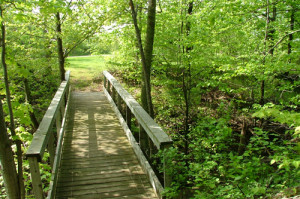 Bridge on Brow Trail in spring