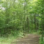 Rough cut of Ironwood Trail