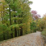 Driveway (partial) to Bunkie in fall