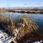 Escarpment Pond early winter