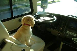Emma Driving