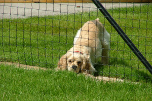 Emma at Fence