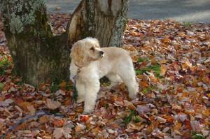 Emma in Autumn